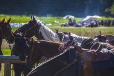 Ranch at Rock Creek Breakfast Ride Horses