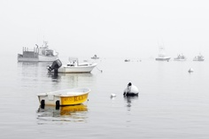 Same foggy, misty day in Chatham, MA along with the seal...great day!