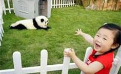 I want a panda dog!