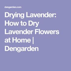 Drying Lavender: How to Dry Lavender Flowers at Home | Dengarden