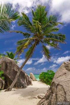 "palm on the beach - Anse Source D'Argent / La Digue / Seychelles Follow me on <a href=""http://www.facebook.com/norlies1"">facebook</a>"