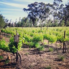 Beaumont Wines in Botrivier, Western Cape
