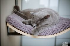 Oval shelf,cat wall bed, cat shelves, cat furniture, maple or walnut wood, grey cushion, modern design, best for you cat to lay down