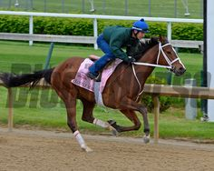 Caption: Lovely Maria works<br /> Horses on the track at Churchill Downs on Sat. April 26, 2015, in Louisville, Ky., in preparation for the Kentucky Derby and Kentucky Oaks.<br /> Works4_26_15 image224<br /> Photo by Anne M. Eberhardt