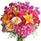 Order & buy mother's day flowers online from Giftblooms. We offer exclusive mother's day flower delivery anywhere in Brazil. Choose your flowers from our stunning mother's day flowers collection. Birthday Flower Delivery, Same Day Flower Delivery, Summer Flowers, Fresh Flowers, Beautiful Flowers, Autumn Flowers, Seasonal Flowers, Birthday Flowers For Her, Hot Pink Roses