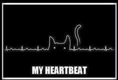 My black cat is my Lil Heartbeat