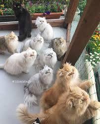 """Résultat de recherche d'images pour """"chat et chien trop mignon séparer"""""""