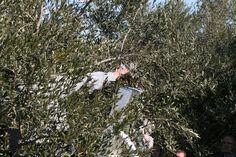 mans - Constantí (Tarragonès)