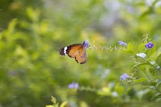 Monarch Butterfly by Kailash Kumar on Indian Animals, Animal 2, Monarch Butterfly, Animals Beautiful, Cutest Animals
