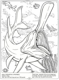 Welcome to Dover Publications River Monsters of the World  Spoonbill Paddlefish
