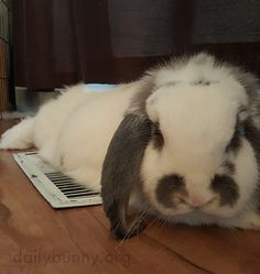 Bunny warms up on the heating vent - January 14, 2016