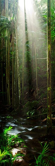 Tamborine National Park, Queensland