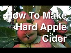 A quick overview. ▶ How to Brew Hard Apple Cider from Start to Finish Using Apples - YouTube