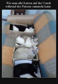 How to get all the cats on the couch during the plastering - Gatos Graciosos Pretty Cats, Beautiful Cats, Animals Beautiful, Funny Cats, Funny Animals, Cute Animals, Crazy Cat Lady, Crazy Cats, Happy Boxing Day