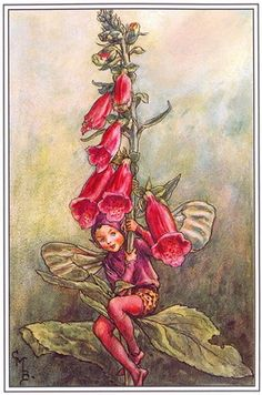 Cicely Mary Barker - I need this fairy to help me grow foxglove!