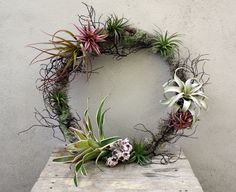 crosspollination: tillandsia and bromeliad wreaths