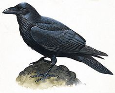 """October is the perfect month for """"Poe's The Raven""""."""