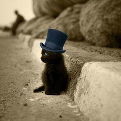 little cat with a slash hat
