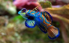 30 Pictures of Sea Animal with their Amazing Color Effect 21