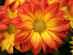 bright-orange-flower.jpg (800×606)