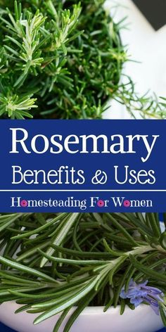 Rosemary Herb Health Benefits, you'd be surprised at what the benefits of rosemary is and how you can use it everyday in your life.