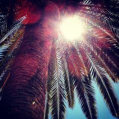 Palmera - Palm tree. Eivissa, instagram, iphone4