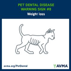 If your pet is losing weight, contact your veterinarian. For more information about pet dental health and the importance of preventive dental care for all pets, visit avma.org/PetDental.