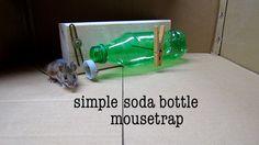 Diy Simple Soda Bottle Mousetrap