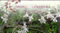Beverly J Mether-Makela - YouTube