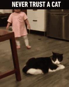 never trust a cat