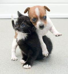 Buttons the puppy was the runt of the litter and was rejected by her mother, but at Battersea Cats and Dogs Home, he found someone who loves him unconditionally: Kitty the kitten. The two were placed together as infants and are now inseparable.