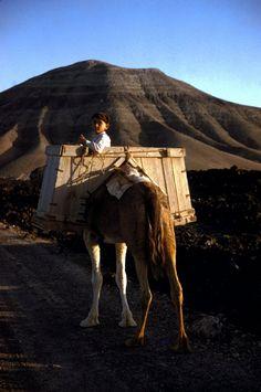 GREECE. Crete. 1955. A young boy on a camel. Erich Lessing