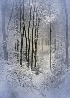 ✯ Winter Forest