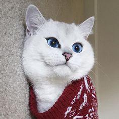 Feeling pretty in my ugly sweater