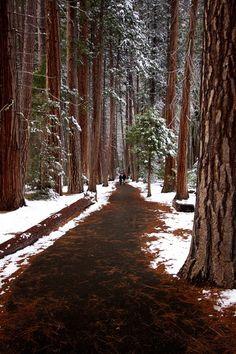 Snowy Day, The Redwoods, California  photo via hilkka