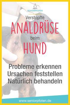 Probleme mit der Analdrüse beim Hund ♥ Viele Hunde leiden unter #Verstopfung und #Entzündung der #Analdrüse - wir haben das erst dieses Jahr erfahren müssen.  In meinem Artikel erfährst du, wie du Probleme mit der Analdrüse bei deinem #Hund erkennst und was genau #Schlittenfahren damit zu tun hat. Außerdem zeige ich dir, welche Ursachen eine verstopfte Analdrüse haben kann und wie du sie natürlich behandeln und deinem Hund helfen kannst. #hunde #after #hausmittel #homöopathie Yorkie, Chihuahua, Weimaraner, Russell Terrier, Animals And Pets, Puppy Love, How To Find Out, About Me Blog, Dogs