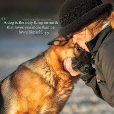 Wicked Training Your German Shepherd Dog Ideas. Mind Blowing Training Your German Shepherd Dog Ideas. German Shepherd Puppies, German Shepherds, Mundo Animal, Dog Quotes, Beautiful Dogs, Mans Best Friend, Dogs And Puppies, Doggies, Morkie Puppies
