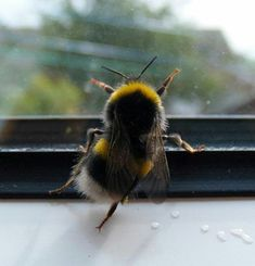 Bees: your Green shoots photographs - AWW - - Oh my gosh its a dancing bee! The post Bees: your Green shoots photographs appeared first on Gag Dad. Animals And Pets, Baby Animals, Funny Animals, Cute Animals, Beautiful Creatures, Animals Beautiful, Uk Bees, Foto Macro, I Love Bees
