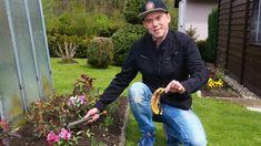 Jedním z nejčastějších nezvaných hostů a zároveň noční můrou všech zahrádkářů jsou mšice. Gardening, Author, Lawn And Garden, Horticulture