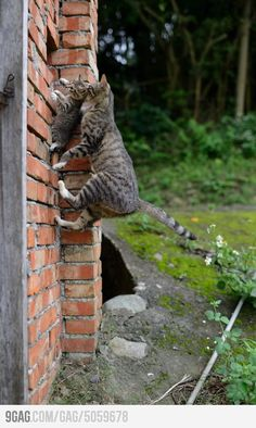 Spider Cat, spider cat, does whatever spider cat wants.... dudududududduu