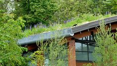Thriving green roof at the Zoomazium in Woodland Park Zoo ©Photograph by Ryan Hawk