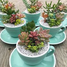 Teacup Succulent Arrangements😍 Tag a Friend to Teacup Succulent Arrangements😍 Tag a Friend to share Succulent Bowls, Succulent Planter Diy, Succulent Gardening, Succulent Arrangements, Succulents In Containers, Cacti And Succulents, Planting Succulents, Planting Flowers, Suculentas Interior