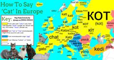 maps-oe:  How To Say 'Cat' In Europe With Etymology I'm beginning to post improved versions of old maps of mine  Follow for More Language maps of Europe Here