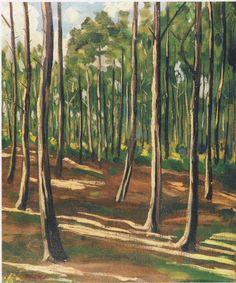 Woodland Scene near Mimizan