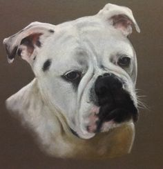 Friends Dog/pastel on paper