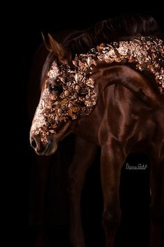 [Equestrian Photography] Diana Wahl : le cheval est d'or All The Pretty Horses, Beautiful Horses, Golden Horse, Equine Photography, Animal Photography, Horse Art, Horse Riding, Horseback Riding, Equestrian