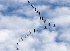 Editor's Note: Last autumn, as I was driving home, I noticed a huge flock of geese flying south in perfect formation. The sight of these birds was marvelous and made me wonder just how many mo… Book Of Poems, Makes Me Wonder, Abstract Photos, Flocking, Animals Photos, Editor, Check, Creative, Birds