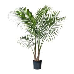 plants - Buscar con Google