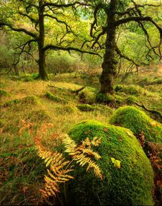 magical, mossy forest  faerie magazine