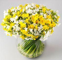 Cornish Narcissi - Happy Spring!